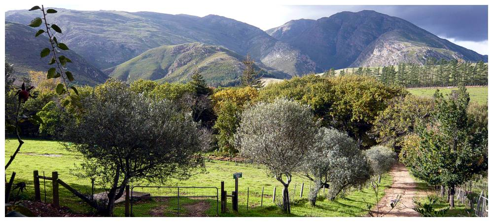 Self-catering Farm Accommodation Greyton Western Cape South Africa